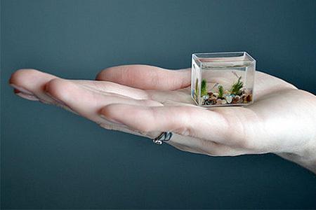 L'acquario piu' piccolo del mondo