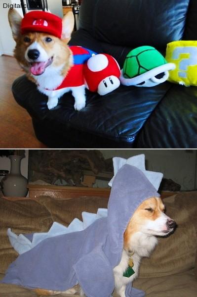 Vestiti da carnevale o Halloween per…i nostri amati cuccioli!!!!