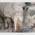 animali-a-due-teste2
