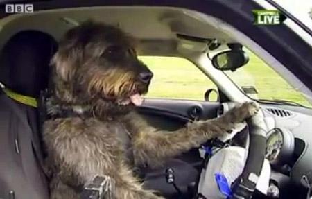La prima scuola guida per cani